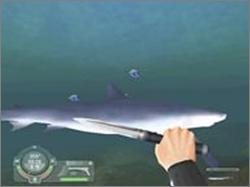 Pantallazo de Shark! Hunting the Great White para PC